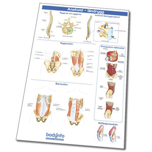 Plansch: Anatomi ländrygg